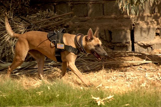 災害救助犬訓練士になるにはどんな資格が必要?